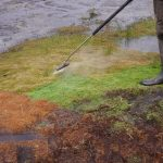 hot water weed control in martin mere - results